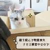 猫雑記 ~わが家のダンボール部屋~