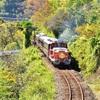 わたらせ渓谷鐵道のDE10トロッコと紅葉の撮影