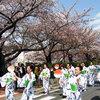 桜まつり 2017年3月下旬~4月上旬