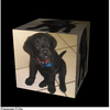 WebKitのNightly Builds版にもWebGL搭載