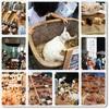 青山パン祭りと日比谷ビアフェス♪