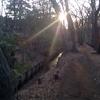 「木漏れ日の道」