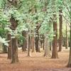【代々木公園 アクセス~自然観察まで 実体験レビュー前編】散策、森林浴も楽しんでみました