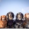 わたしと我が家の犬たちとの話  Instagram live配信
