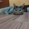 猫の安全と幸せを考える。8月8日は世界猫の日