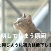 猫が失明してしまう原因