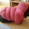 今日の黒猫モモ&白黒猫ナナの動画ー661