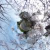 360写真でみる 等々力緑地公園の桜 #360pic