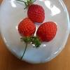大塚ハウス肥料の作り方とイチゴ栽培記録