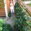 枝豆初収穫
