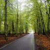 ベラルーシ旅行! 世界遺産のベラヴェジの森で27kmサイクリング!