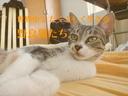 世界中でたくましく生きる野良猫たち
