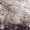 桜の世界でいまの自分の世界を知る