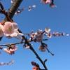 【子育て日記】春の陽気とゴールデンウィークの計画