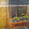 すだれを立てかけて、涼感漂う盆栽空間