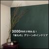 【観葉植物】フラワーベースを合わせても3000円代で作れる、枝ものグリーンのインテリア。