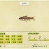 【あつ森】「コイ(鯉)」の出現時期・場所・時間帯情報まとめ【あつまれどうぶつの森】