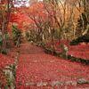 滋賀県の鶏足寺の紅葉と仏像、須賀谷温泉