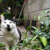 ぶち猫ブラザーズの活躍と旅立ち