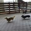 走る犬とヘタレな飼い主。
