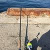 館山釣り日記・釣りを通して学んだこと【釣り始めて1年経ちました。】