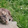 お庭に猫のうんちでお困りではありませんか?猫よけ対策6つ方法