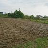 そろそろ収穫?悠悠ホームの健康農園