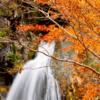 養老渓谷 紅葉の見頃は? 2016 マイナスイオン溢れる紅葉スポット