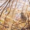 早春の四万十川で野鳥観察&撮影