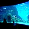 【50%オフ】シーライフ・メルボルン水族館のチケットが半額で買える方法