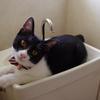 猫に必要な1日の水分量は?夏と冬の違いは?