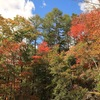高原で色鮮やかな紅葉を楽しむ 佐久穂町「八千穂高原自然園」