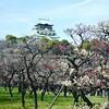 梅を見に大阪城へ。