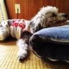 【犬漫才】愛犬家の大変な体験談