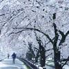 雪の直後、少しの清涼感を楽しむ