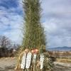 どんと焼きと竹林整備