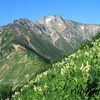 五竜岳。8月上旬。