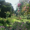 ミモザ・ガーデンの日記 モネの庭