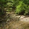 渓流の宝石 ミヤマカワトンボ