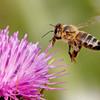 砂糖をハチミツに代用する法則