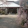 神奈川西部 しだれ桜巡りライド(135km)