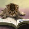 読書が苦手な人に向けた苦手意識を克服する3つの心構え