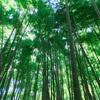 【鎌倉・江ノ島】大満足!日帰り散歩