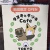 【大人気!】かわいいメニューがたくさん!タヌキとキツネカフェに行ってきた!!!【東京】