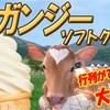 絶品ガンジーソフトクリーム!ガンジー牧場