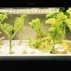 【グリーンファーム】レタス収穫終わり掃除をする【水耕栽培】