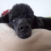 愛犬の問題行動を植物療法で癒す(第四回)