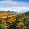【百名山】高峰高原ホテル(車坂峠)から紅葉の浅間山へ。東京から日帰り縦走コース【写真79枚】