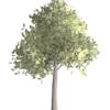 Photoshopで生成した木をイラスト風にする