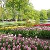 【旅行記】アムステルダム 圧巻のチューリップ畑!キューホフ公園への予約・行き方ガイド 2019年版
